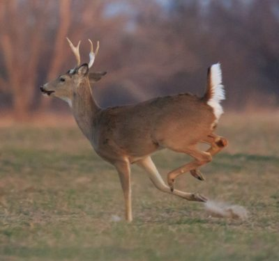 watch labeling providers run like deer
